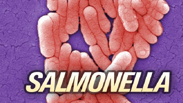 salmonella5 Caption